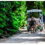 民泊可能エリア‼ビーチから徒歩約5分‼本部町備瀬でフクギ並木に囲まれた売地でました♪